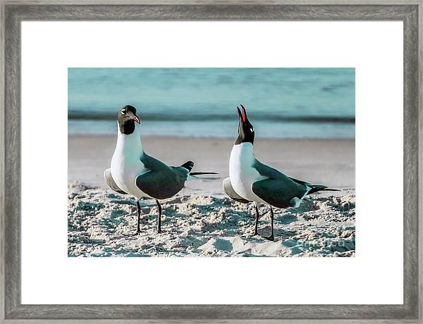 Seagull Serenade 4954 Framed Print