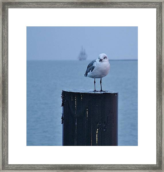 Seagull Ship Framed Print