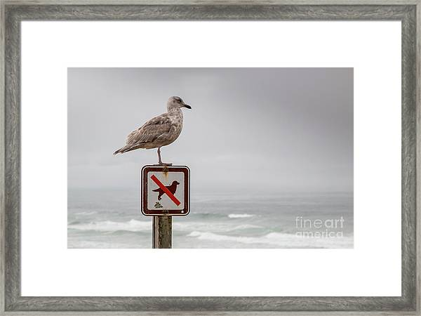 Seagull Standing On Sign And Looking At The Ocean Framed Print