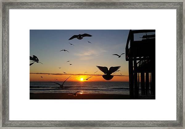 Seagulls At Sunrise Framed Print