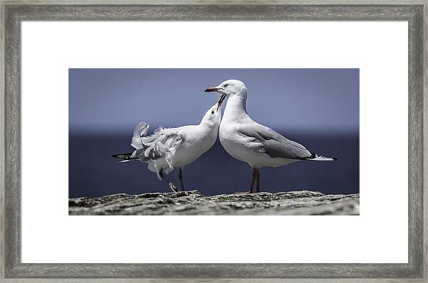 Framed Print featuring the photograph Seagulls by Chris Cousins
