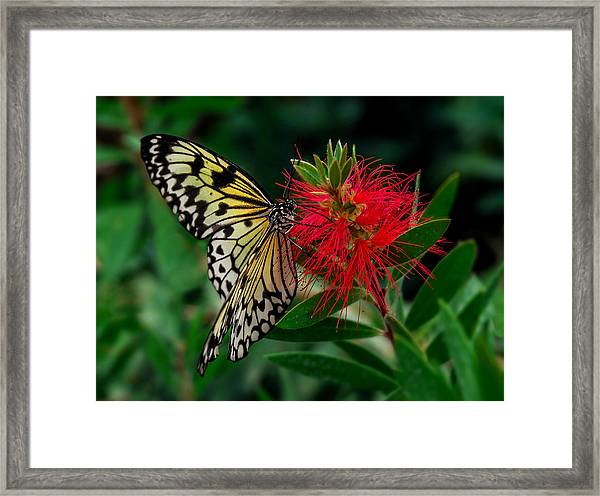 Framed Print featuring the photograph Searching For Nectar by Nick Bywater