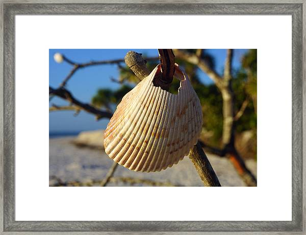 Cockelshell On Tree Branch Framed Print