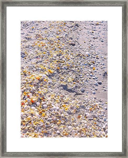 Seashells In Sanibel Island, Florida Framed Print