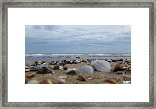 Seashells Seagull Seashore Framed Print