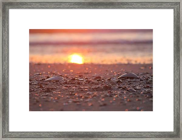 Seashells Suns Reflection Framed Print