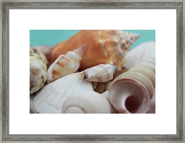 Seaside Seashells Framed Print