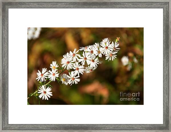 Season Delights Framed Print