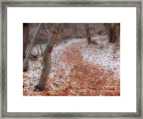 Season's Change Framed Print