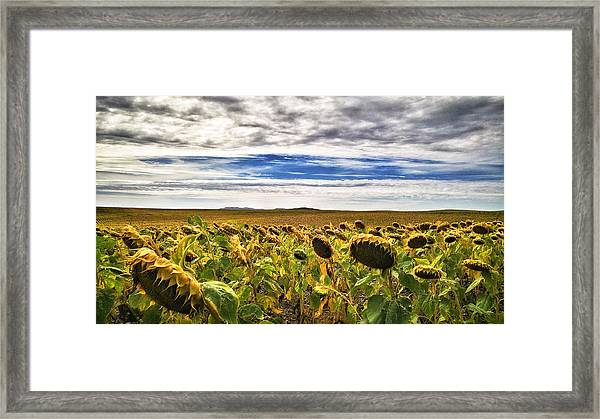 Seasons In The Sun Framed Print