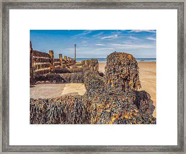 Framed Print featuring the photograph Seaweed Covered by Nick Bywater