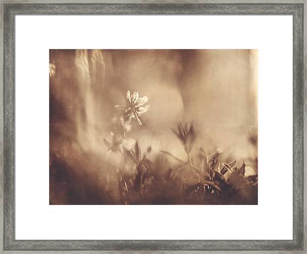 Secret Admirer Framed Print