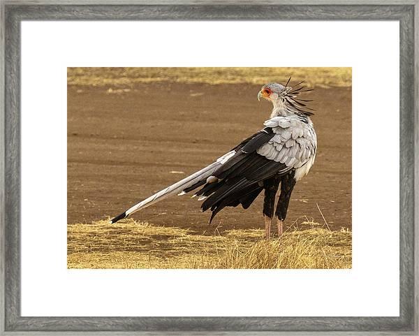 Secretary Bird Tanzania Framed Print