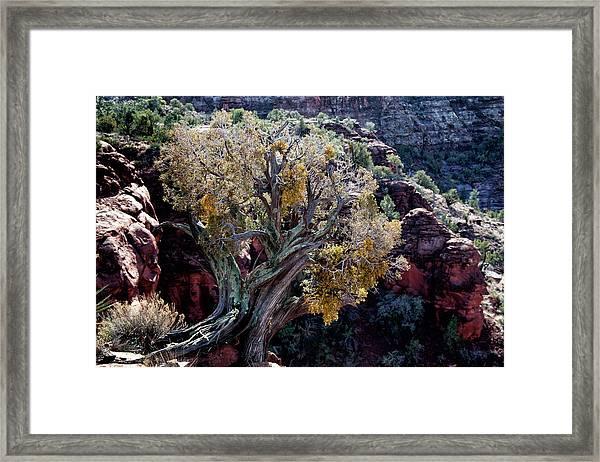Sedona Tree #2 Framed Print