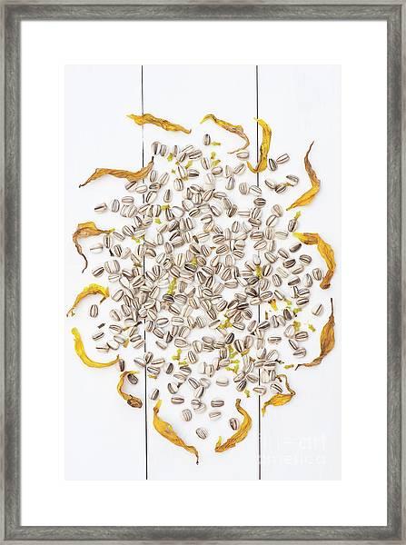 Seed Flower Framed Print