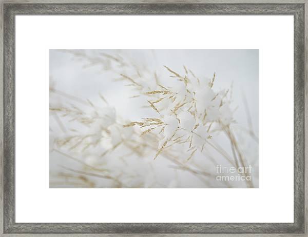 Seeds Of Winter Framed Print