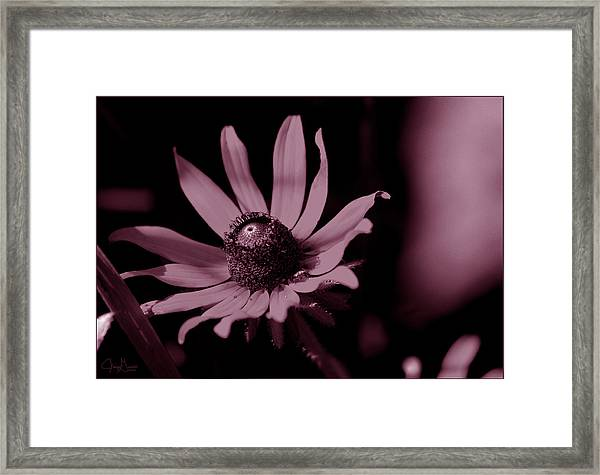 Seeing Life Through Rose-colored Glasses Framed Print