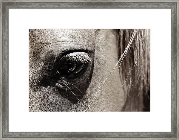 Stillness In The Eye Of A Horse Framed Print