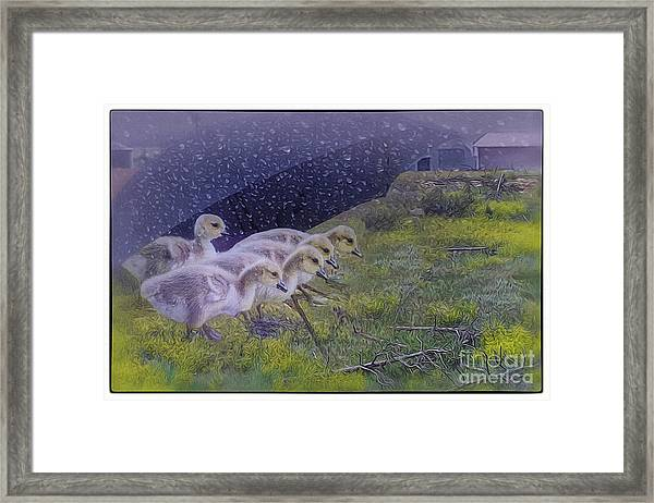 Seeking Shelter From The Storm Digital Artwork By Mary Lou Chmur Framed Print
