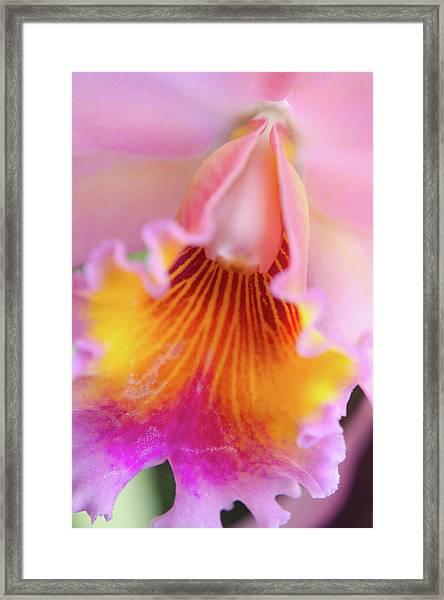 Sensual Floral Framed Print