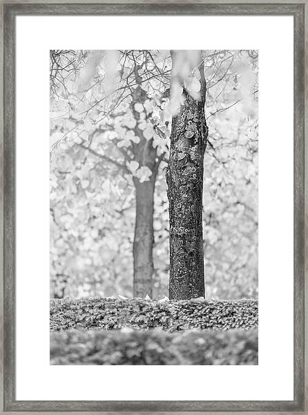 Separate Framed Print