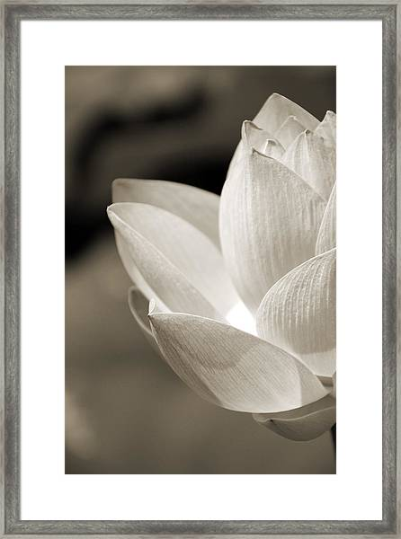 Sepia Lotus Framed Print