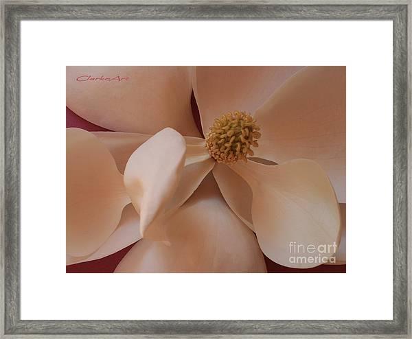 Sepia Magnolia Macro Framed Print
