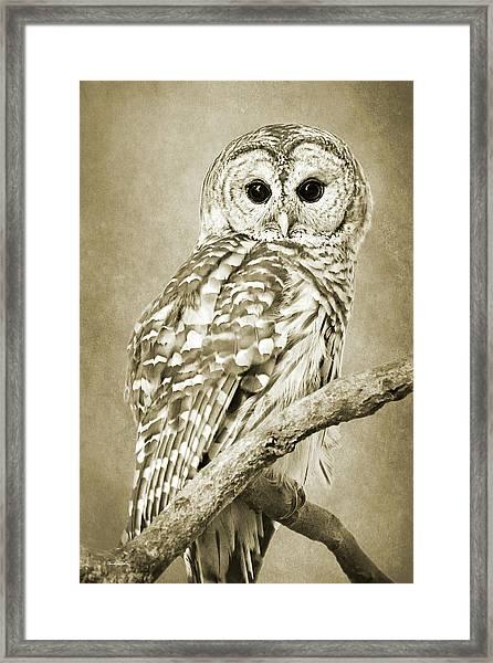 Sepia Owl Framed Print