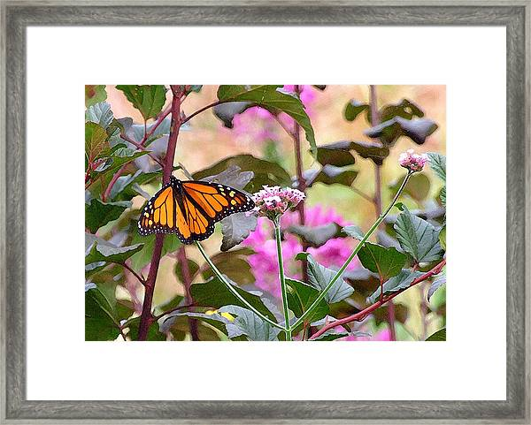 September Monarch Framed Print