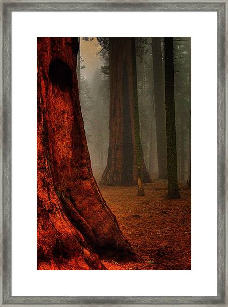Sequoias In The Clouds Framed Print