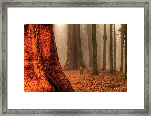 Sequoias Touching The Clouds Framed Print