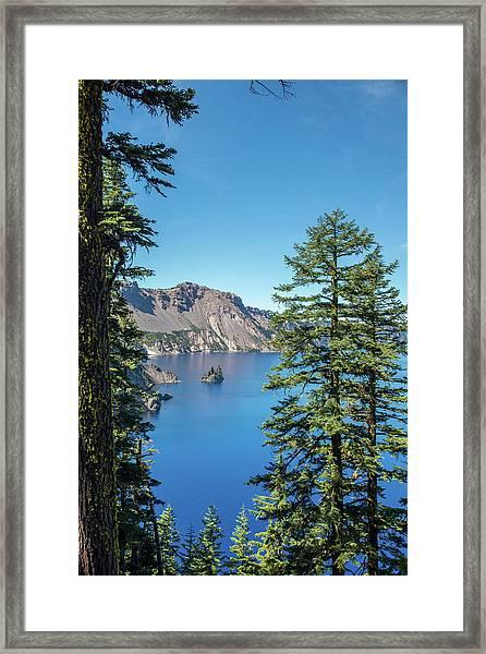 Serene Pines Framed Print