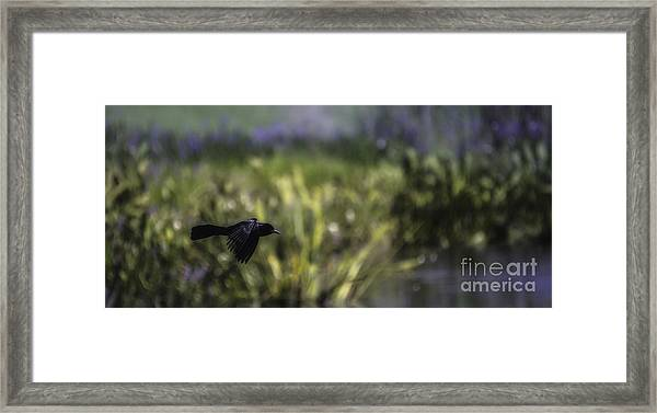 Serenity In The Marshes Framed Print
