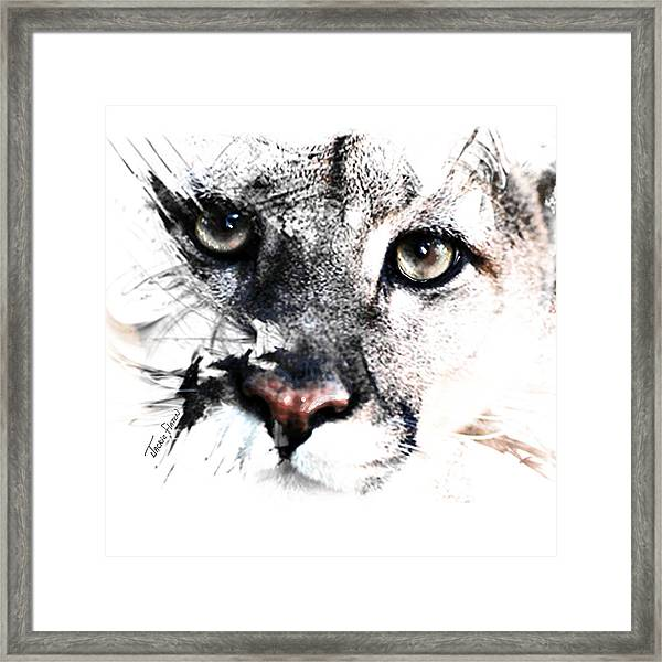 Seriously Cougar Framed Print