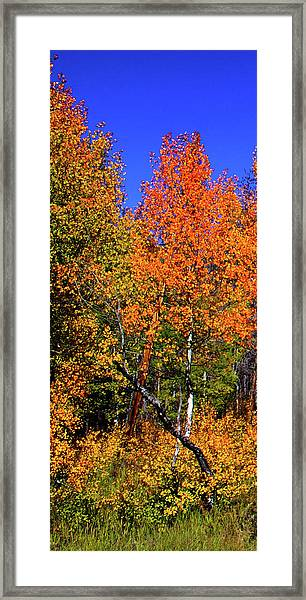 Set 54 - Image 1 Of 5 - 10 Inch W Framed Print