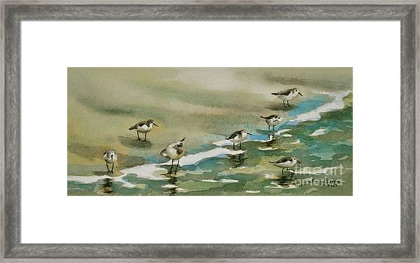 Seven Sandpipers At The Seashore  Framed Print