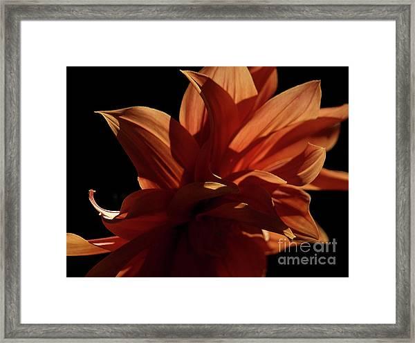 Sfgarden01 Framed Print