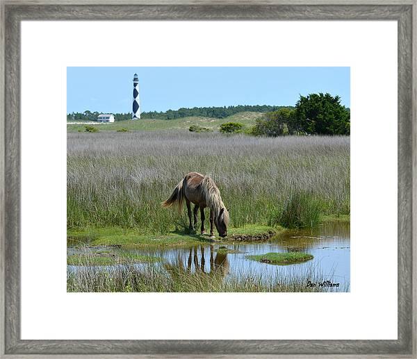 Shackleford Pony Framed Print