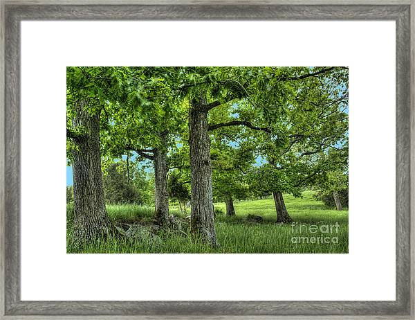 Shade Trees Framed Print