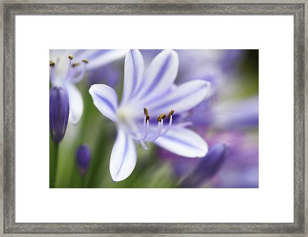 Shades Of The Afternoon Framed Print
