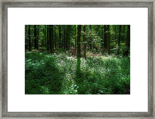 Shadow And Light In A Forest Framed Print