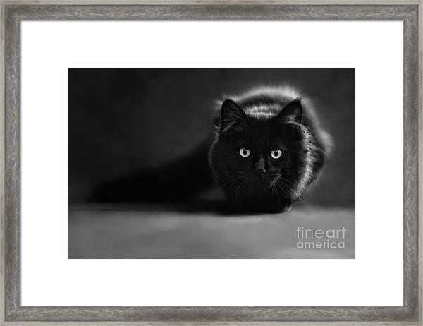 Shadow Cat 2 Framed Print