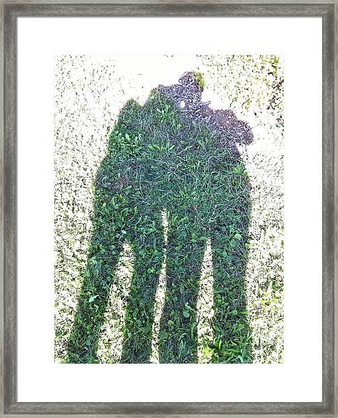 Shadow In The Meadow Framed Print