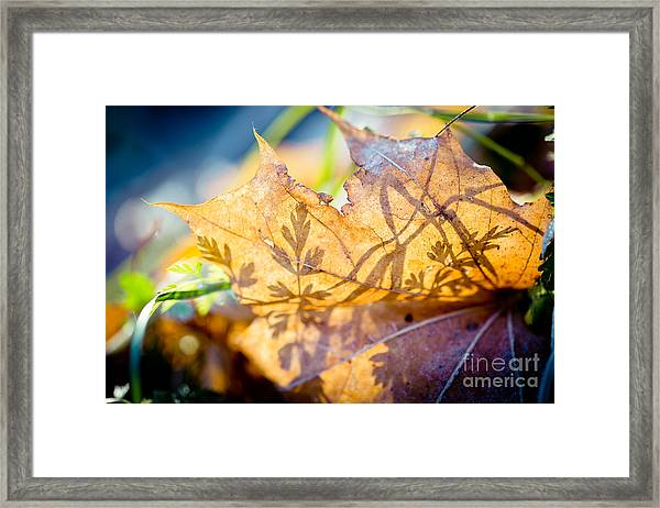 Framed Print featuring the photograph Shadow Of Autumn  Artmif.lv by Raimond Klavins