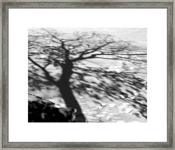 Shadow Tree  Herrick Lake  Naperville Illinois Framed Print