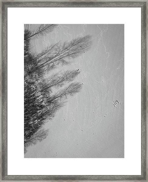 Shadow Walkers Framed Print