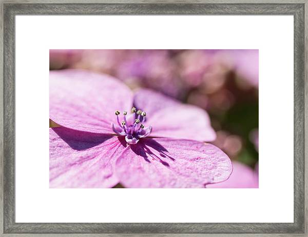 Shadows In Pink Framed Print
