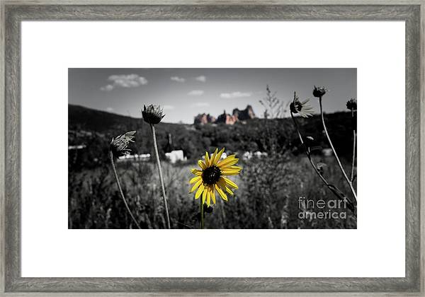 Shadows In The Distance Framed Print