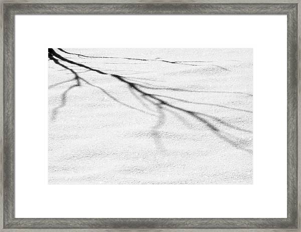 Shadows Of Winter Framed Print