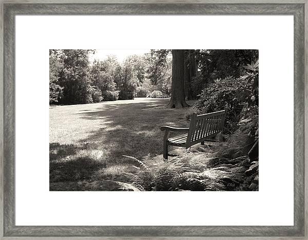 Shady Bench Framed Print